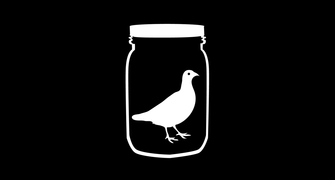 Inspired by the Guided by Voices song Jar of Cardinals
