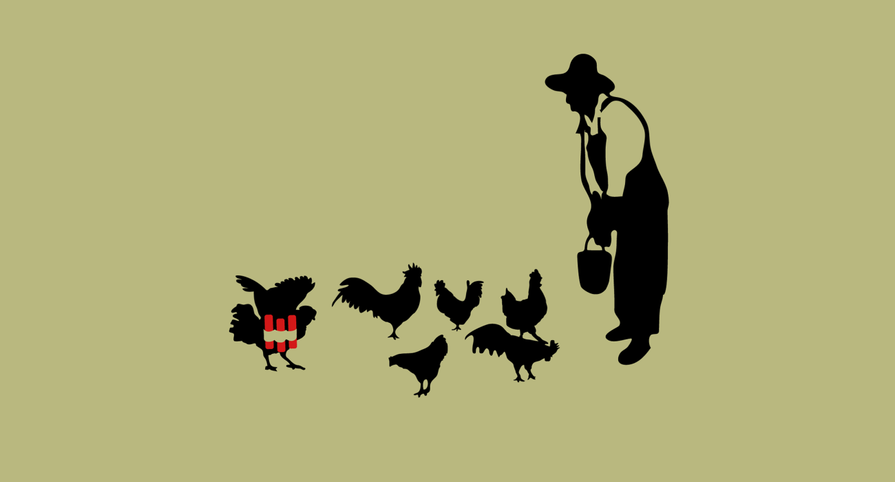 A farmer leaning over his flock of chickens tossing them grain from a bucket. But what's this! One of the chickens has lifted its wings only to reveal a suicide bombers vest!